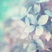 Petals in Pastels by lyndemc
