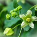 Fine green flowers by haskar