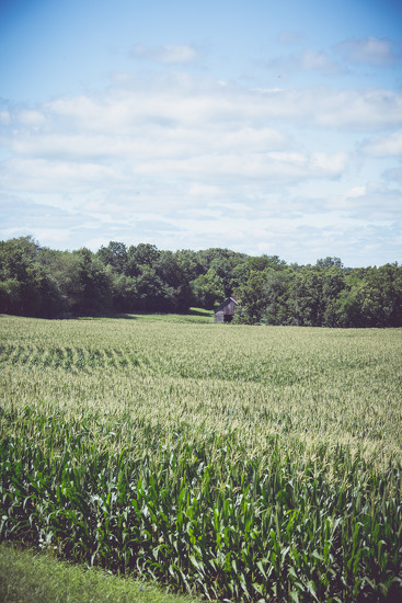 Illinois Countryside by lyndemc