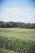 22nd Jul 2017 - Illinois Countryside