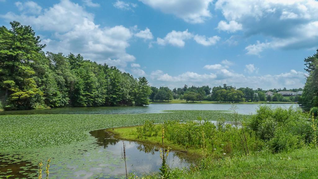 Wetlands by batfish