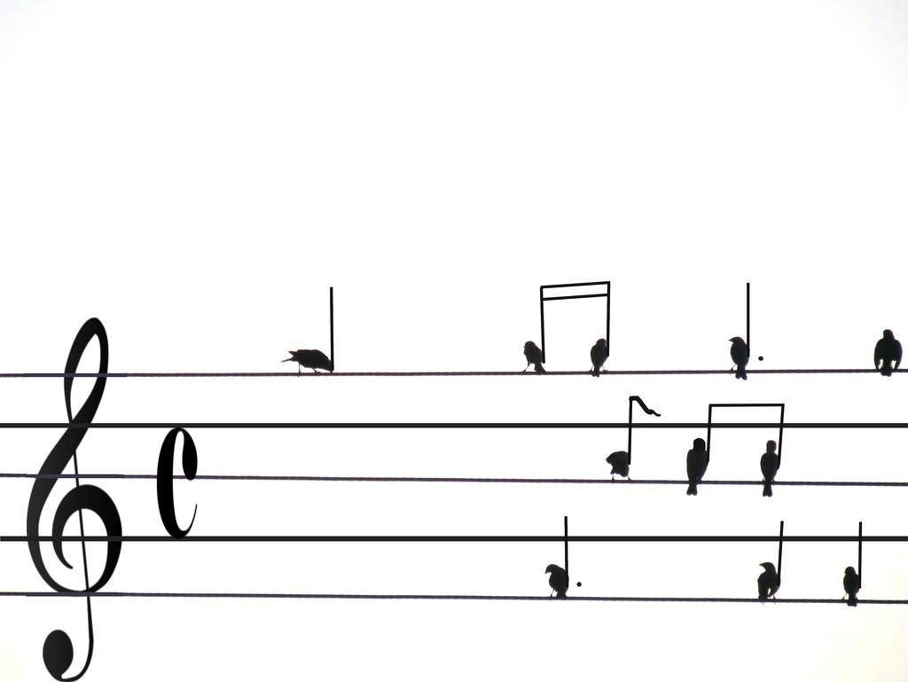 Bird Song by grammyn