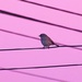 Early bird on a wire with a sunrise pink sky by maureenpp