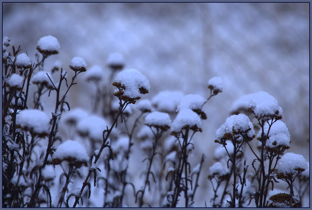 Snow in Central by dide