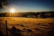 24th Jul 2017 - Good Morning Sunshine