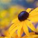 Summer Delight by lyndemc