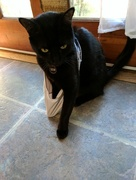 27th Jun 2017 - Crazy Underwear Cat