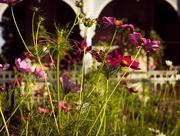 24th Jul 2017 - Garden in the evening sun