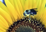 24th Jul 2017 - Pollen Legs