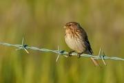 17th Jul 2017 - A BIRD N' BARBS