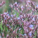 estuary flora