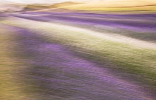 Lavender landscape by dulciknit