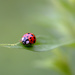 Lady Bug Impersonator! by fayefaye