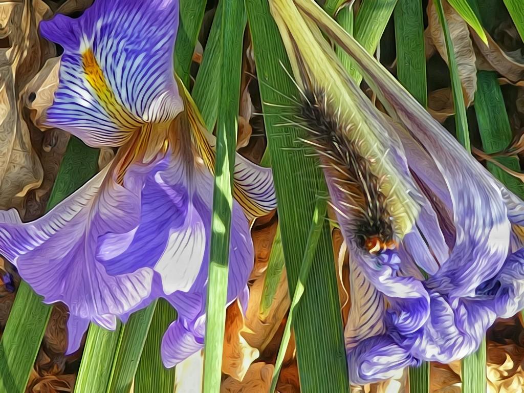 Someone found a pretty flower...... by ludwigsdiana