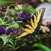 Butterfly Wings by marylandgirl58