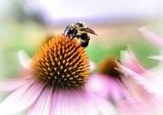 26th Jul 2017 - Bee Nice