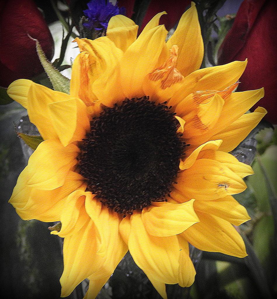 Sunny flowers by homeschoolmom