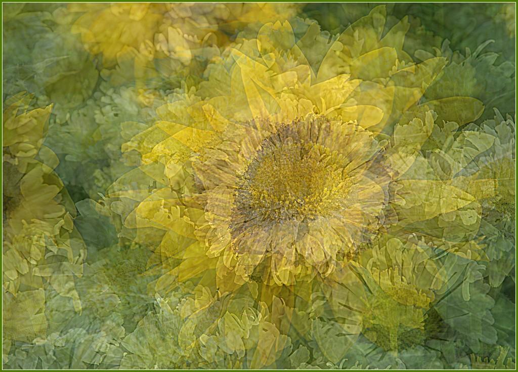 mellow yellow by quietpurplehaze