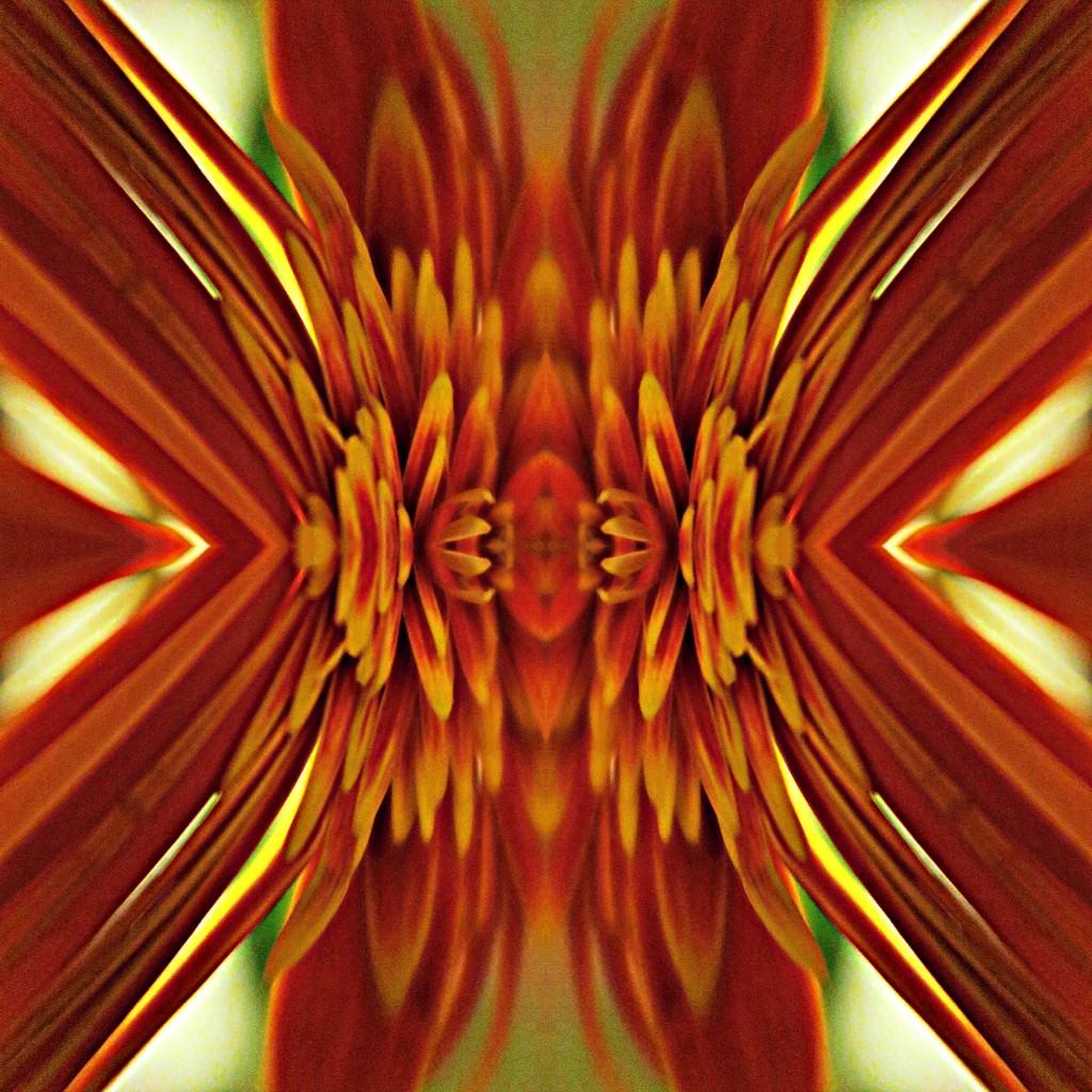 gerber daisy by jennyp