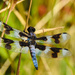 Dragon Fly  by seattlite