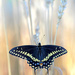 The beautiful black swallowtail butterfly! by fayefaye