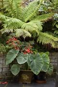 29th Jul 2017 - English Jungle Garden