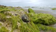 28th Jul 2017 - At the beach