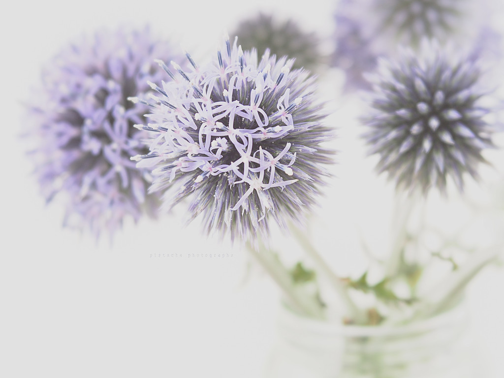lilac spikes by pistache