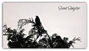 31st Jul 2017 - Sweet Songster