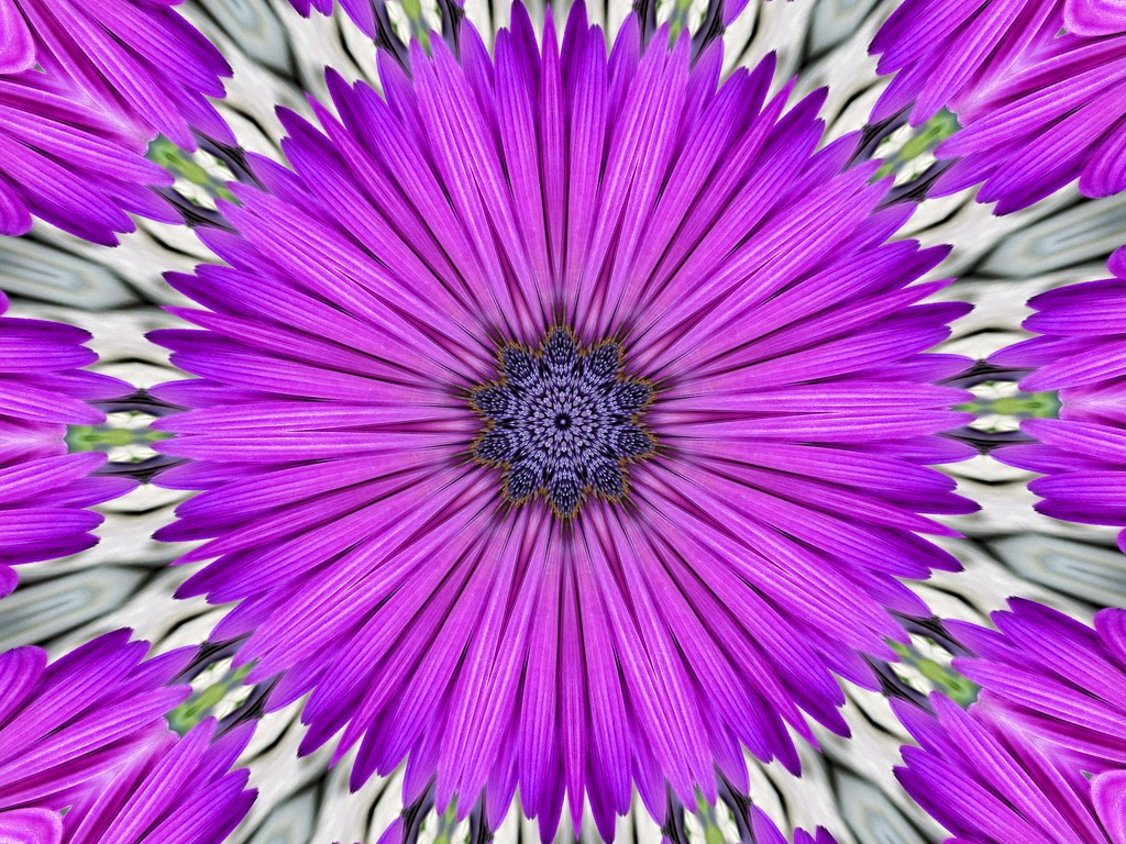 Our Cape Daisy (Osteospermum) for the Etsooi challenge by ludwigsdiana