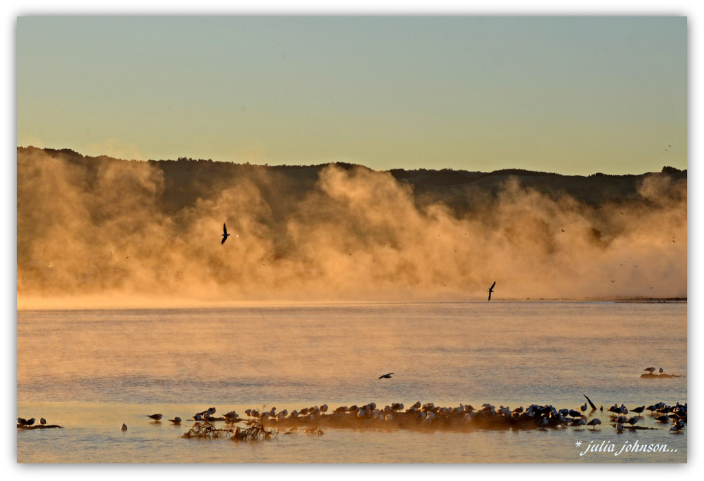 Seagull Hangout...  On a frosty morning... by julzmaioro