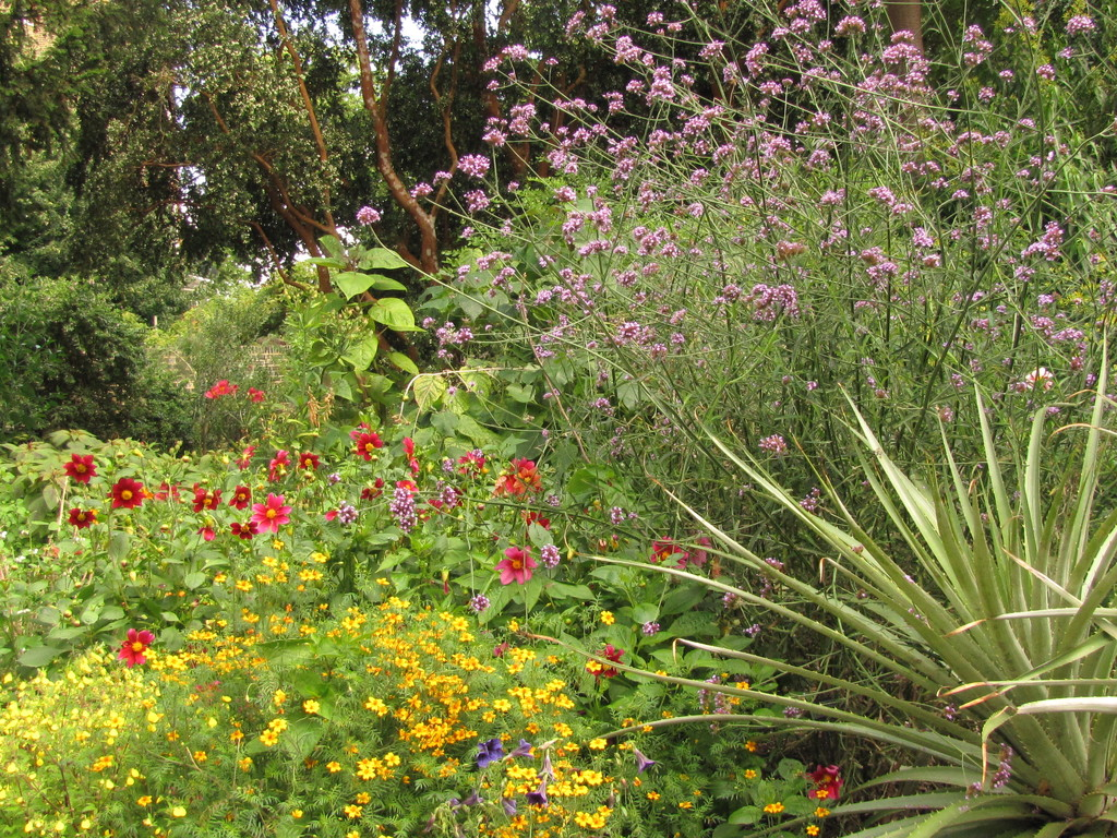 Chelsea Physic Garden by busylady