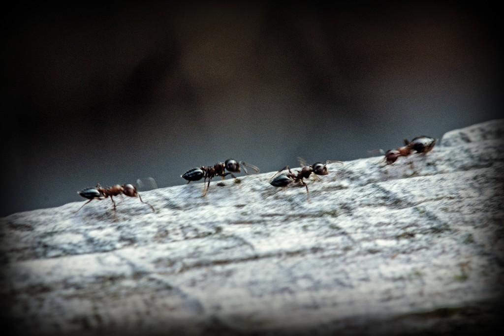 Ants In Motion by farmreporter