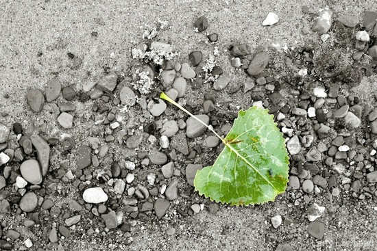 Leaf, pebbles by lsquared