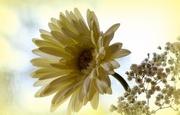 1st Aug 2017 - Pretty yellow flower