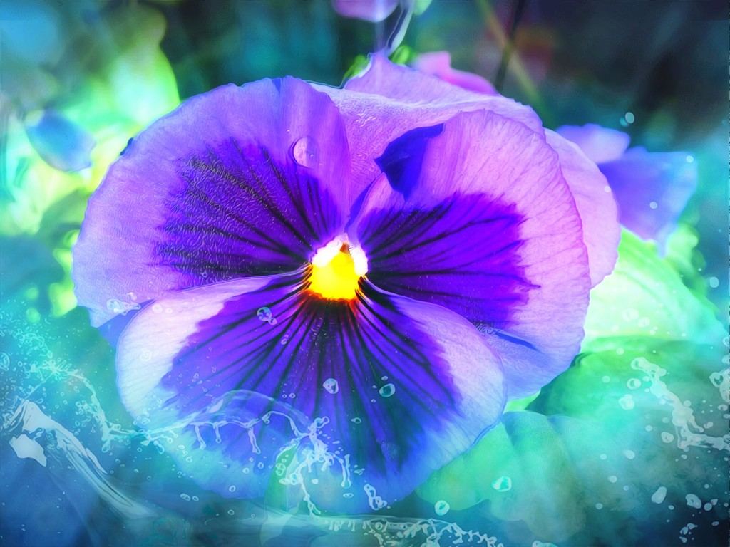 A Pansy for the Etsooi challenge. by ludwigsdiana