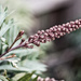 August Theme - Nifty Fifty Lens! by gigiflower