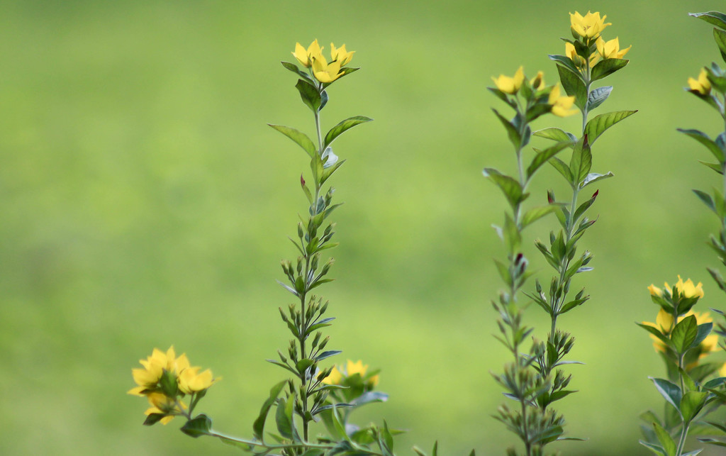 Tiny yellow flowers by mittens