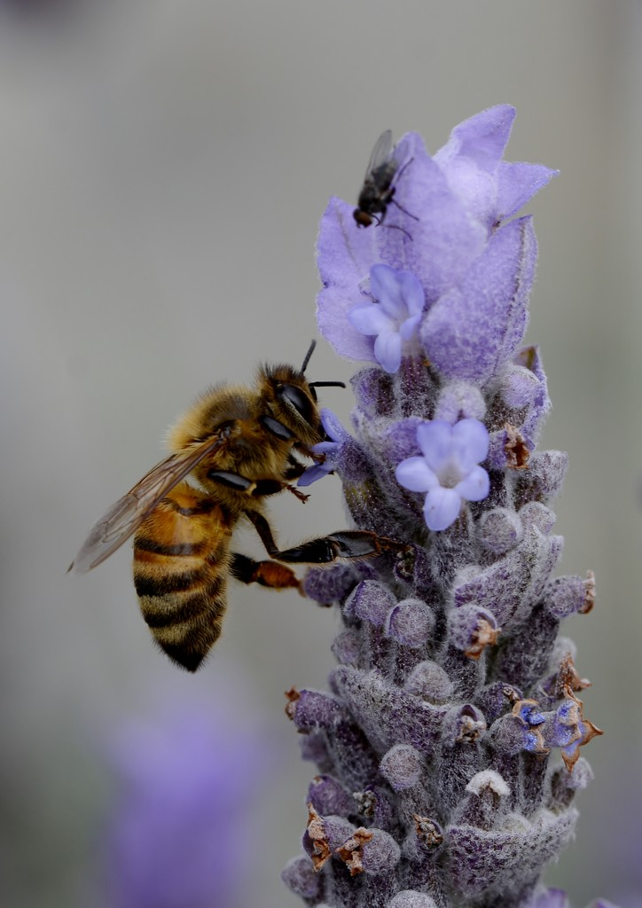 A Bee And A Bug...._DSC5243 by merrelyn