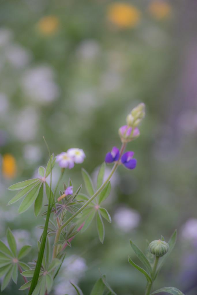 Wildflowers by cdonohoue