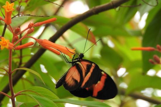 DSCN3080 butterfly by marijbar