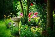 5th Aug 2017 - Summertime Garden