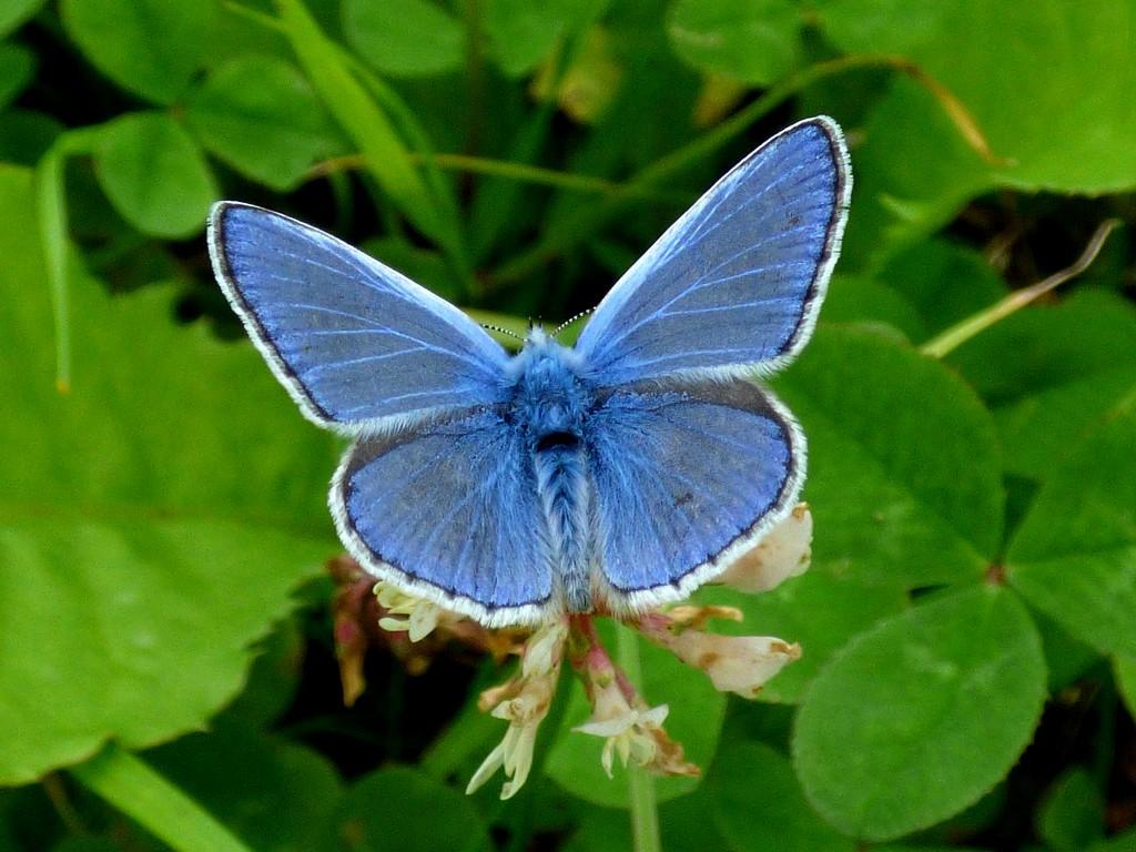 Blue by julienne1