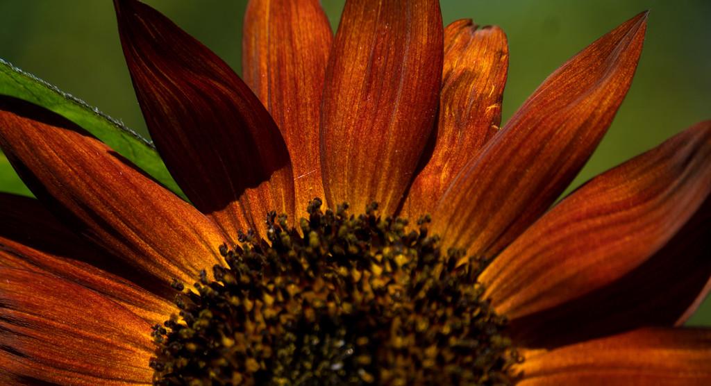 Autumn Sun by randystreat