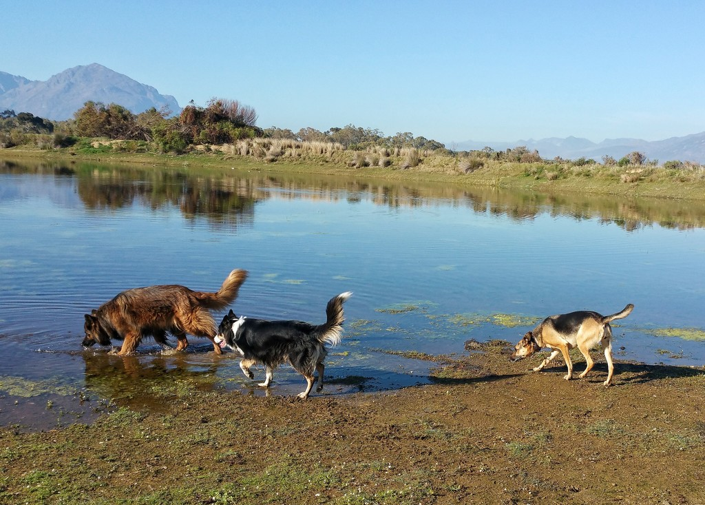 Dogs at the Dam by salza