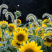 Sunflowers and grass by randystreat