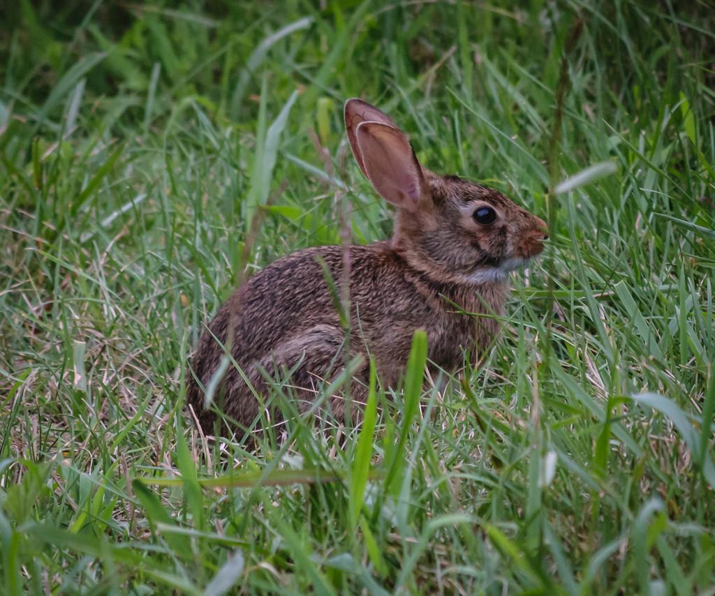 Jack Rabbit by marylandgirl58