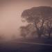 A Bleak Morning by purdey