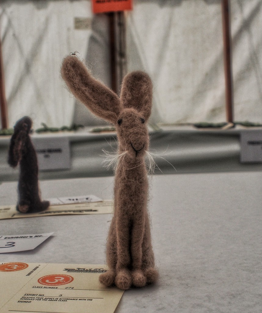 Small rabbit....no as corrected by @beryl this must be a hare with those large ears!  by happypat