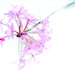 NF-6 Epidendrum by annied